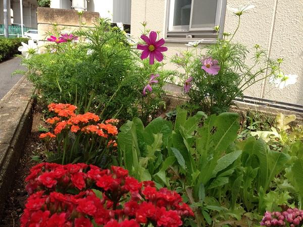 ハウス前花壇