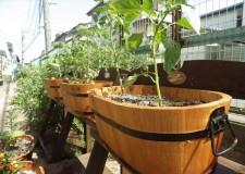暖かい時期には植物もよく育ちます。