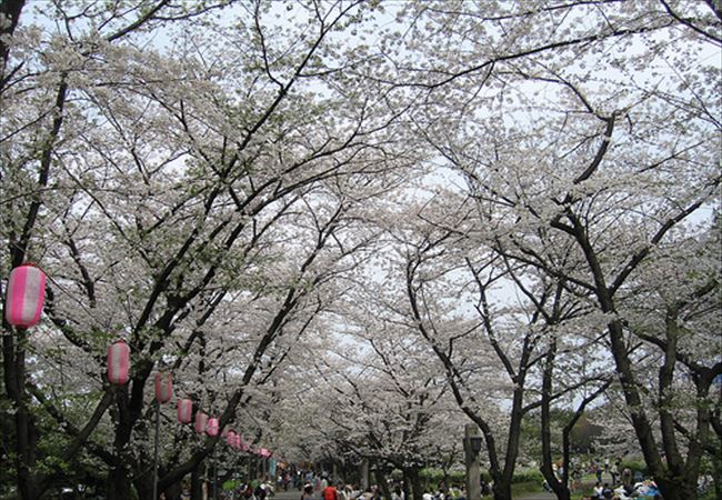 tatumi park