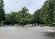 公園内のジョギングエリア