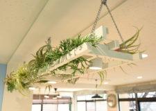 元は天井で使われていた木材で作ったボタニカル。美しく再生
