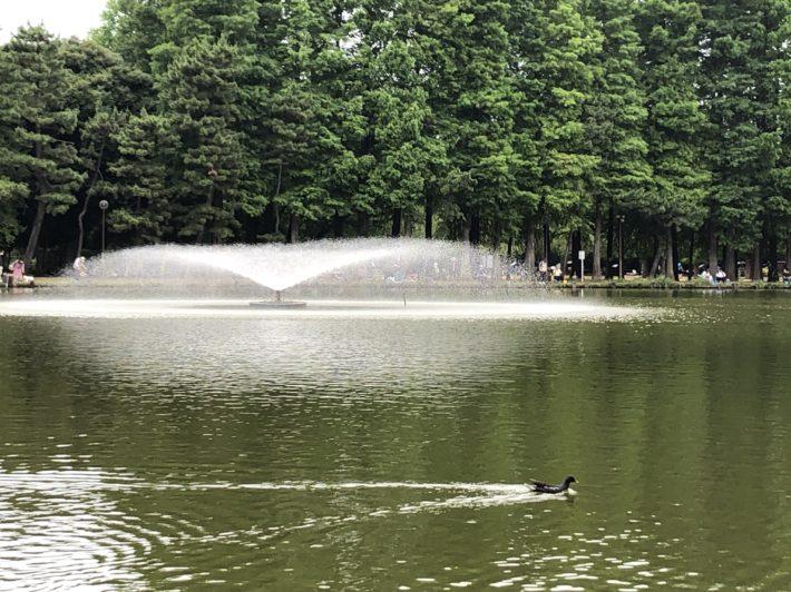 南浦和周辺散策⛲別所沼公園