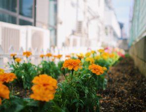 ファーストハウス西船橋 家庭菜園開始!!