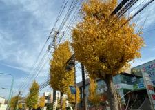 物件の前の通りは銀杏並木になっており